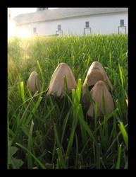Mushrooms by AwkwardScience