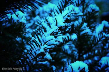 Snowy Pine Needles by ImageWonder
