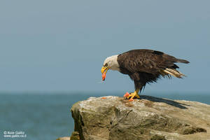 American Icon by RoieG