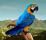 Guacamaya by Sheflonmened