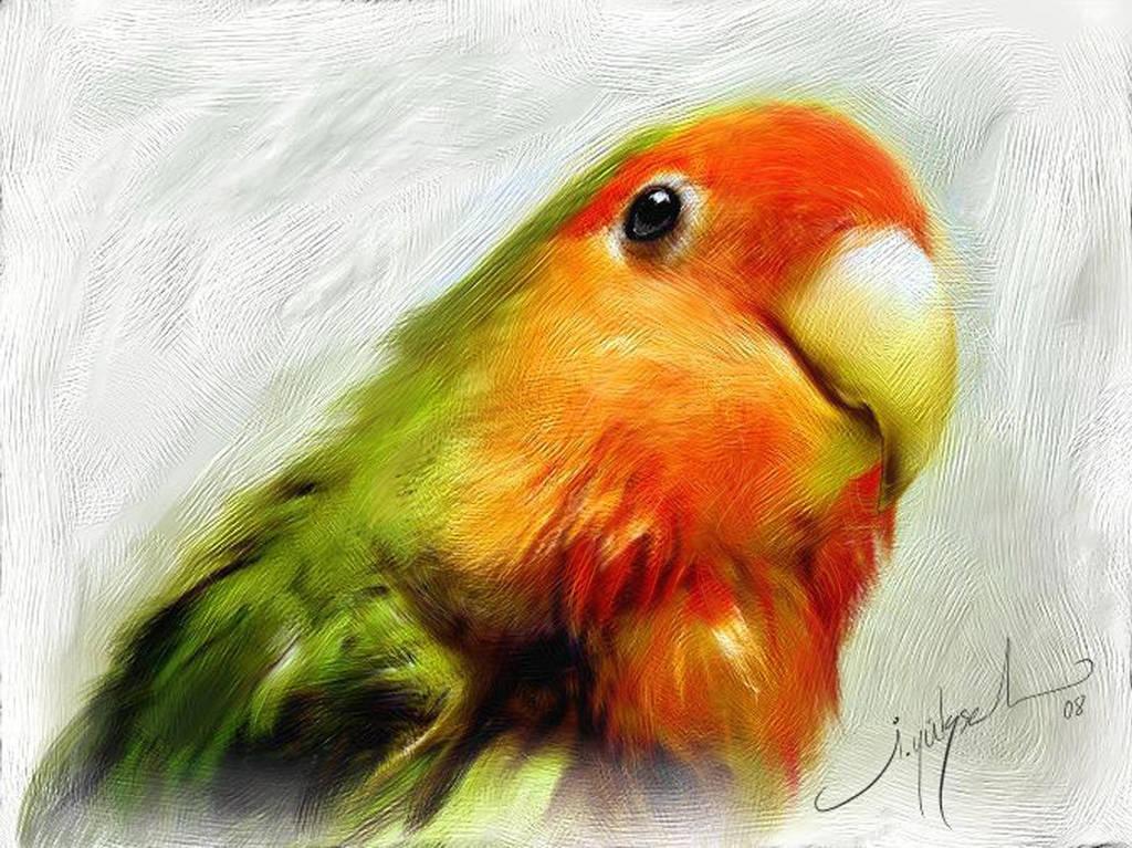 LoveBird's Look by ilker-yuksel