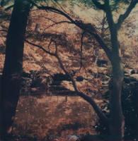 Japanese Gardens in Autumn by futurowoman