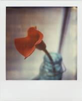 A Lily in a Jar by futurowoman