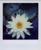 lotusland by futurowoman