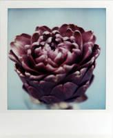 The Purple Artichoke by futurowoman