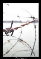 BarbedWire by maurice