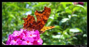 Butterfly by maurice