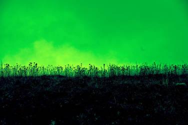 fondo hierba by Dimatges