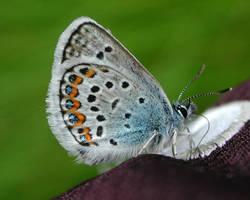 Blue butterfly by zironjones