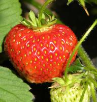Strawberry time by zironjones