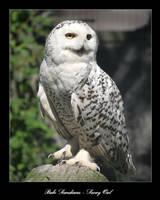 Snowy Owl by zironjones