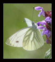 Light Butterfly by zironjones