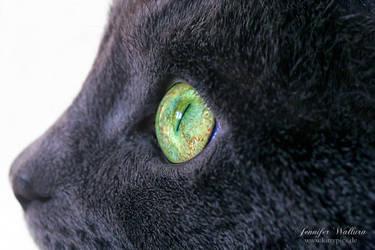 green emerald eyes by JenniferWallura