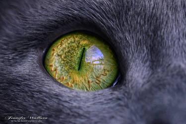Green eye by JenniferWallura