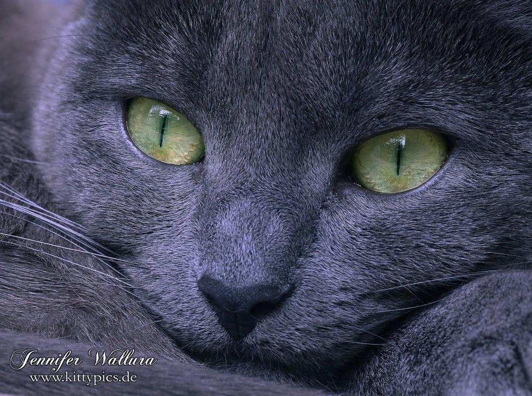 Green Eyes by JenniferWallura