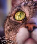 cat eyes by JenniferWallura
