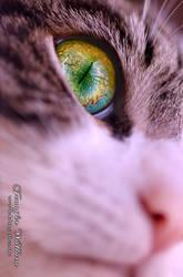 Eye focus by JenniferWallura