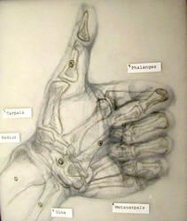 Hand Study III + overlay by drewisgenki