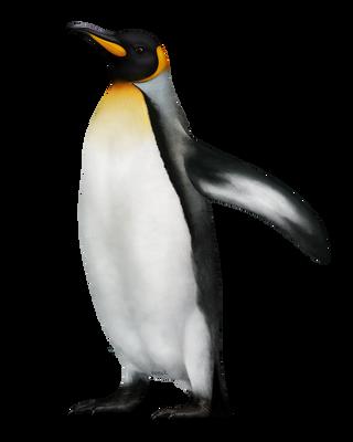 Penguin painting by konikfryzyjski