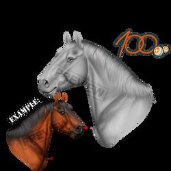 Pay2Use Horse Portrait Greyscale by konikfryzyjski