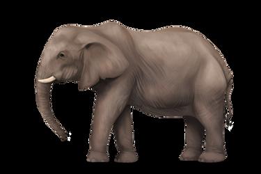 Elephant Speedpaint by konikfryzyjski