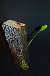 Wood by Carlos-Delgado-art
