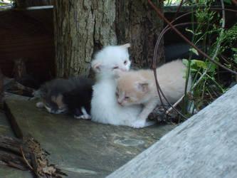 Cali's kitties by missy-03