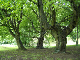 Trees 5 by Sed-rah-Stock