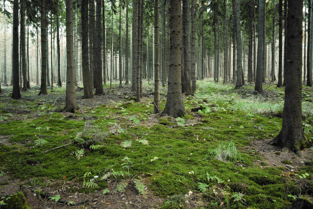 Forest Stock 4 by Sed-rah-Stock