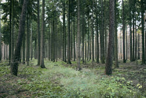 Forest Stock 12 by Sed-rah-Stock