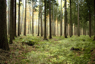 Forest Stock 13 by Sed-rah-Stock
