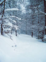 Snow Forest Stock 1 by Sed-rah-Stock