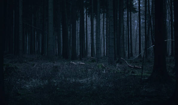 Forest Stock 29 by Sed-rah-Stock