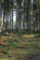 Forest Stock 33 by Sed-rah-Stock