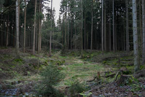 Forest Stock 57 by Sed-rah-Stock
