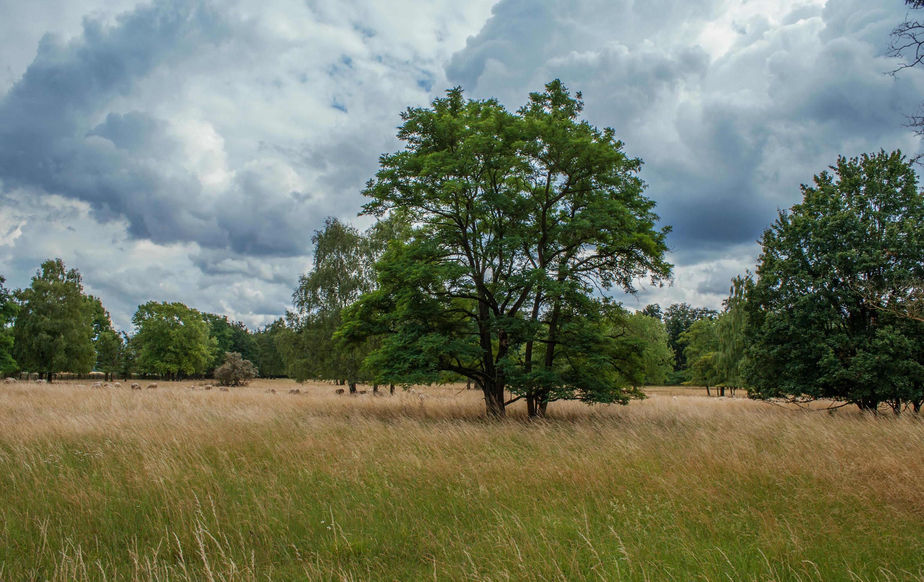 Field 56 by Sed-rah-Stock