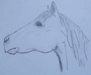 Horse by RaiyahS2