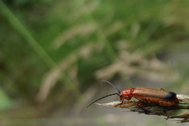 It's A Bugs World by RaiyahS2