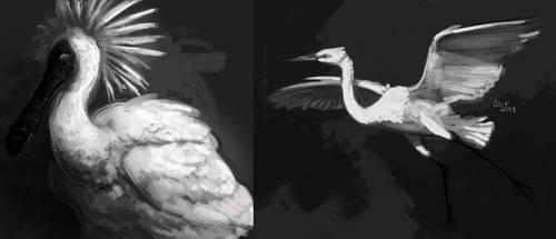 Platalea regia et Ardea alba  [DECEMBIRD 2018] by Deltalix
