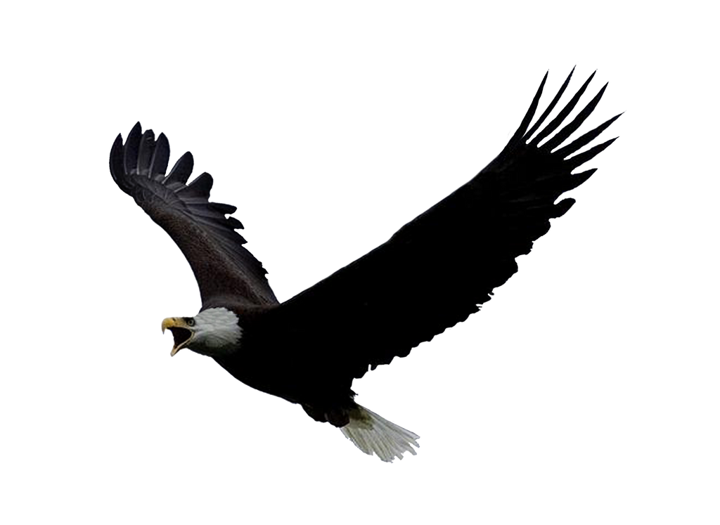 Png Eagle by Moonglowlilly