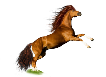 Png Horse 1 by Moonglowlilly