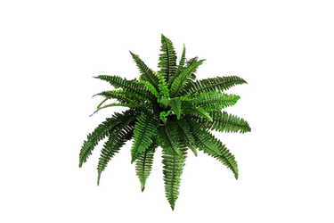 Png Plant C by Moonglowlilly
