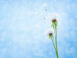 Dandelion by chamirra