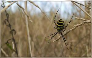 Spider-wasp by Defyz