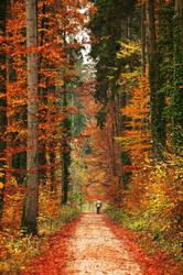fall by swissloko