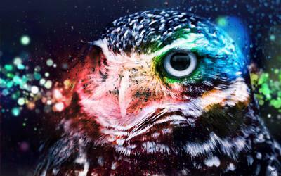 Bokeh Owl by J9qw