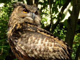 Owl II by Jaavii