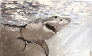 Great White by wedders