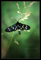 fly little o n e by codrinseth