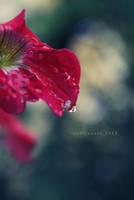 the rain has passed.. by codrinseth